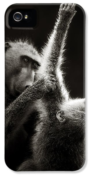 Chacma Baboons Grooming IPhone 5 Case by Johan Swanepoel