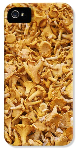 Chanterelle Mushroom IPhone 5 Case by Anonymous