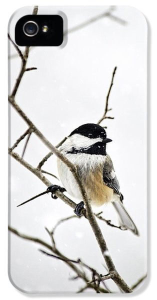 Charming Winter Chickadee IPhone 5 Case