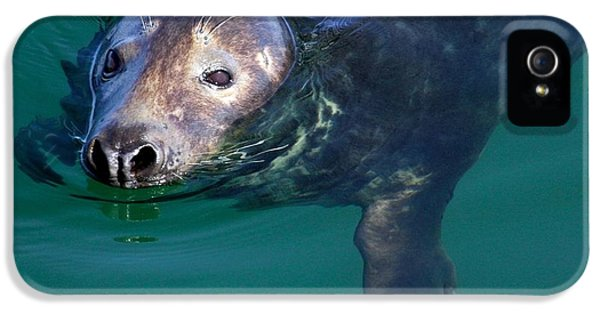 Breathe iPhone 5 Case - Chatham Harbor Seal by Stuart Litoff
