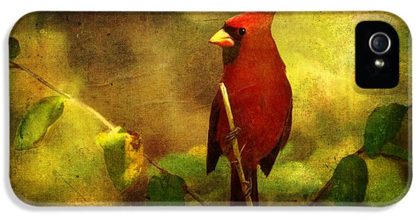 Cheery Red Cardinal  IPhone 5 Case