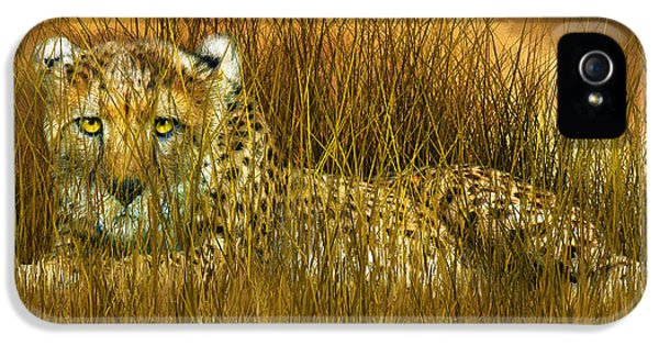 Cheetah - In The Wild Grass IPhone 5 Case by Carol Cavalaris