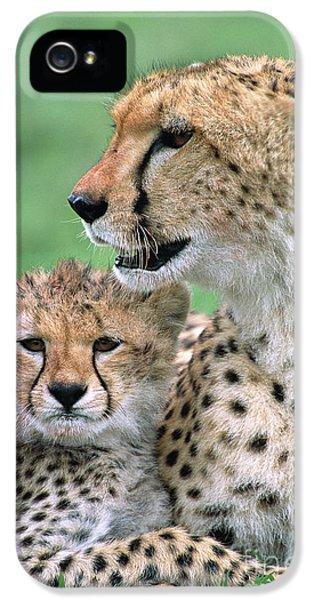 Cheetah Mother And Cub IPhone 5 Case by Yva Momatiuk John Eastcott