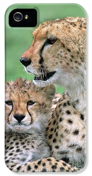 Cheetah Mother And Cub IPhone 5 / 5s Case by Yva Momatiuk John Eastcott