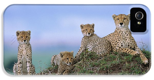 Cheetah Mother And Cubs Masai Mara IPhone 5 Case by Yva Momatiuk John Eastcott