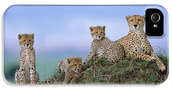 Cheetah Mother And Cubs Masai Mara IPhone 5 / 5s Case by Yva Momatiuk John Eastcott
