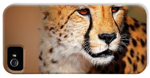 Cheetah Portrait IPhone 5 / 5s Case by Johan Swanepoel
