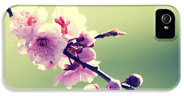 Cherry Blooms IPhone 5 Case by Yulia Kazansky