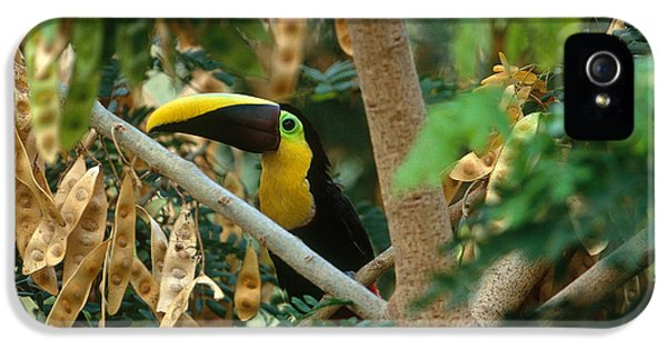 Chestnut-mandibled Toucan IPhone 5 Case by Art Wolfe