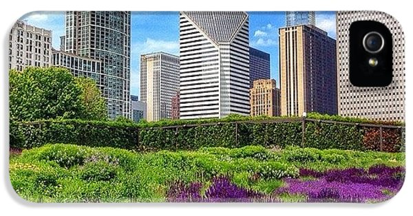 Beautiful iPhone 5 Case - Chicago Skyline At Lurie Garden by Paul Velgos