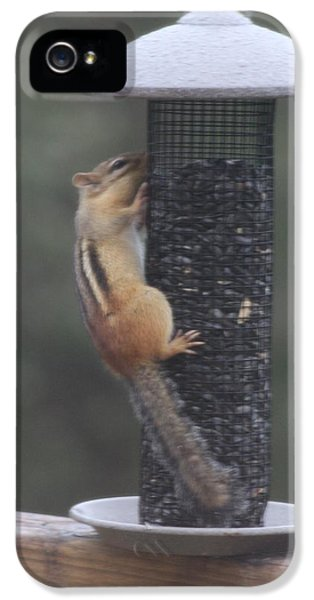 Chipmunk 1 IPhone 5 Case by Michael Collins