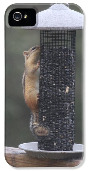 Chipmunk 2 IPhone 5 Case by Michael Collins