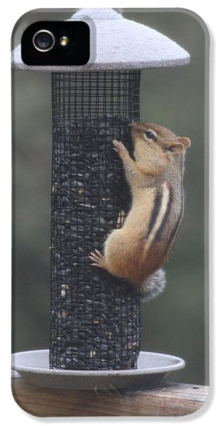 Chipmunk 3 IPhone 5 Case by Michael Collins