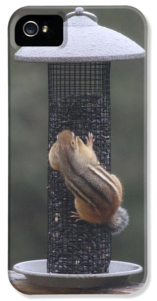 Chipmunk 4 IPhone 5 Case by Michael Collins