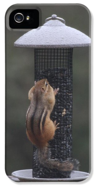 Chipmunk 5 IPhone 5 Case by Michael Collins