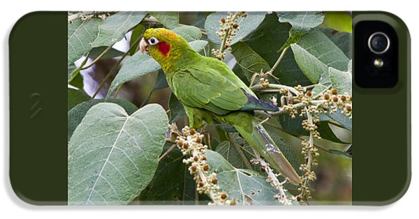 Chiriqui Conure 2 IPhone 5 / 5s Case by Heiko Koehrer-Wagner