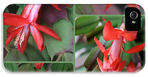 Christmas Cactus Collage IPhone 5 Case by Carol Groenen