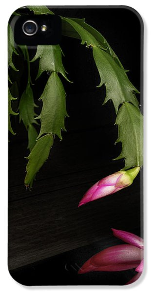 Christmas Cactus IPhone 5 Case by David and Carol Kelly