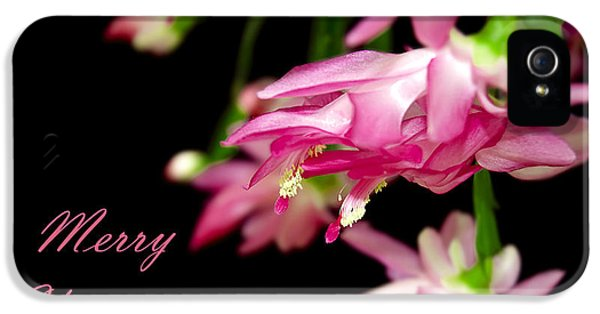 Christmas Cactus Greeting Card IPhone 5 Case by Carolyn Marshall