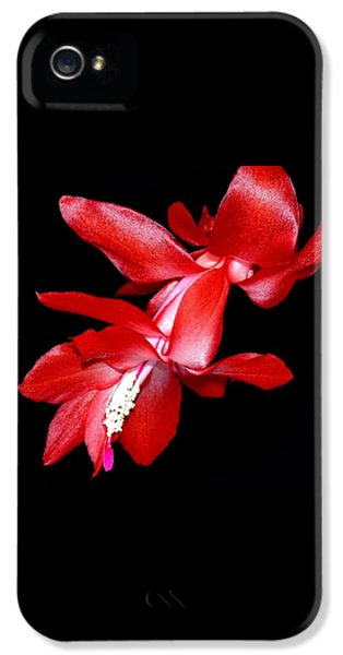Christmas Cactus IPhone 5 Case by Shane Bechler