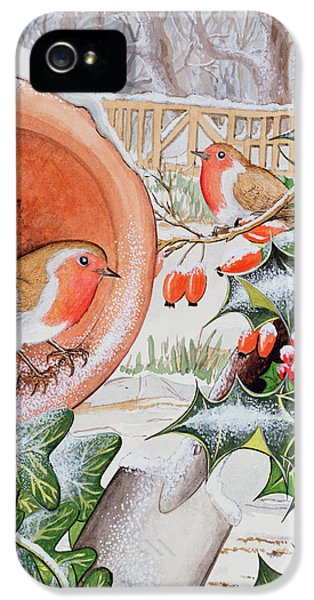 Christmas Robins IPhone 5 Case by Tony Todd