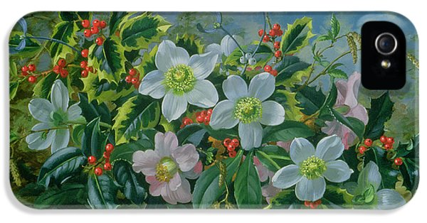 Christmas Roses And Holly IPhone 5 Case by Albert Williams
