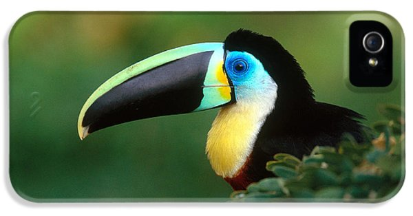 Citron-throated Toucan IPhone 5 / 5s Case by Art Wolfe