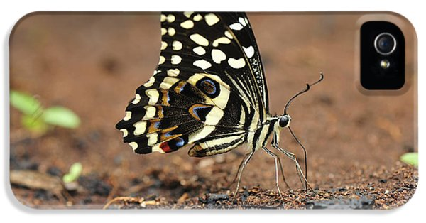 Citrus Butterfly Puddling Jozani IPhone 5 Case by Thomas Marent