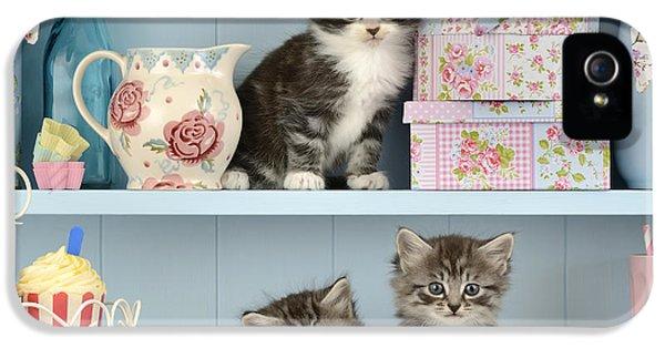 Baking Shelf Kittens IPhone 5 Case by Greg Cuddiford