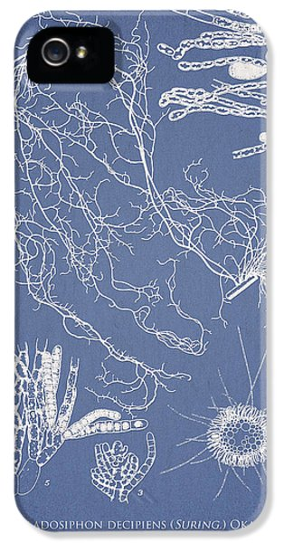 Cladosiphon Decipiens IPhone 5 Case by Aged Pixel