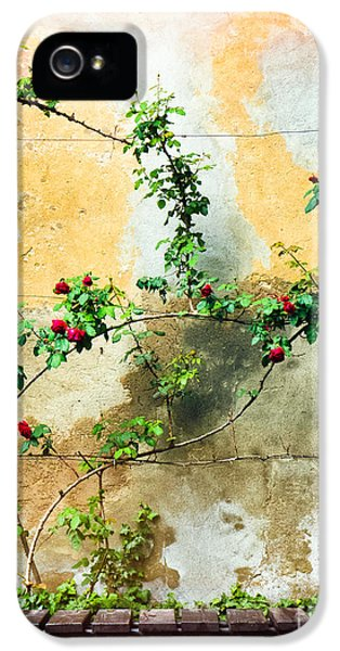IPhone 5 Case featuring the photograph Climbing Rose Plant by Silvia Ganora