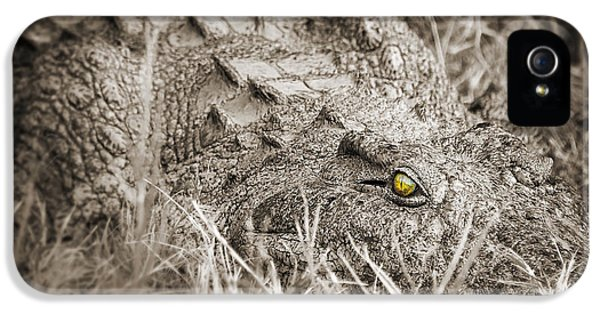 Crocodile iPhone 5 Case - Close Crocodile  by Delphimages Photo Creations