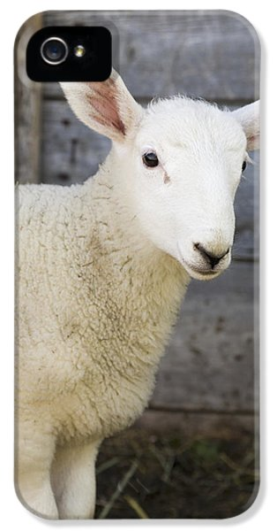 Sheep iPhone 5 Case - Close Up Of A Baby Lamb by Michael Interisano