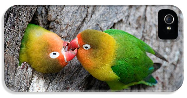 Lovebird iPhone 5 Case - Close-up Of A Pair Of Lovebirds, Ndutu by Panoramic Images