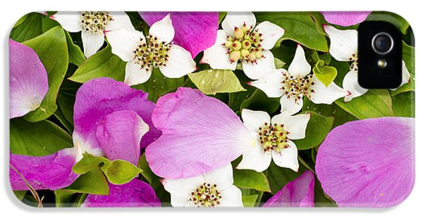 Close Up Of Prickly Rose Petals And IPhone 5 Case by Carl R. Battreall