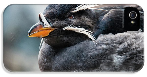 Auklets iPhone 5 Case - Close-up Of Rhinoceros Auklet by Turner Forte