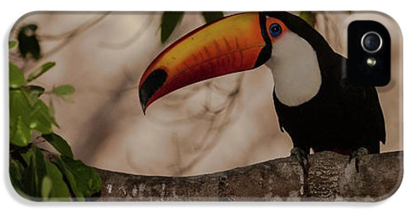 Close-up Of Tocu Toucan Ramphastos Toco IPhone 5 Case by Panoramic Images