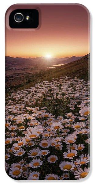 Daisy iPhone 5 Case - Closer To The Sun by Sergio Abevilla
