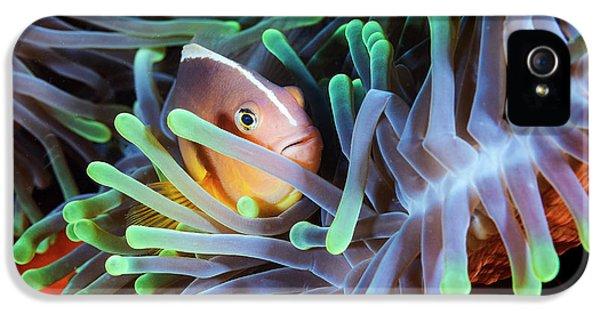 Clownfish IPhone 5 Case