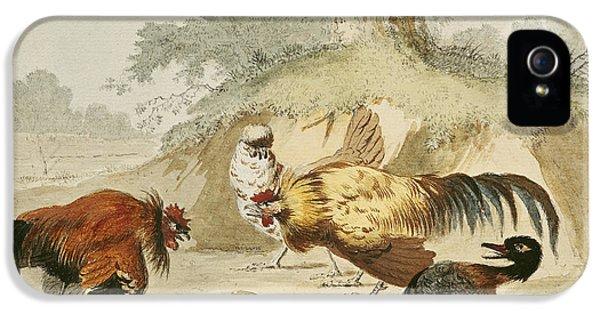 Cocks Fighting IPhone 5 / 5s Case by Melchior de Hondecoeter