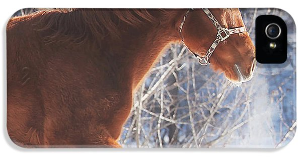 Horse iPhone 5 Case - Cold by Carrie Ann Grippo-Pike