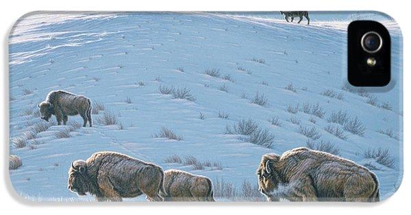 Buffalo iPhone 5 Case - Cold Day At Lamar by Paul Krapf