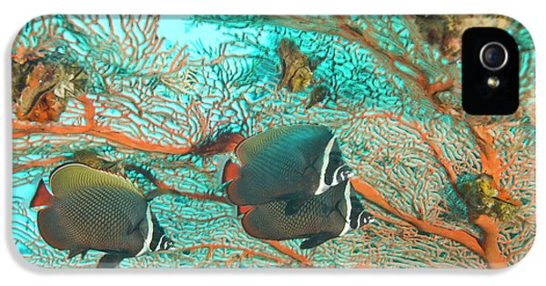 Collare Butterflyfish (chaetodon Collare IPhone 5 Case by Stuart Westmorland