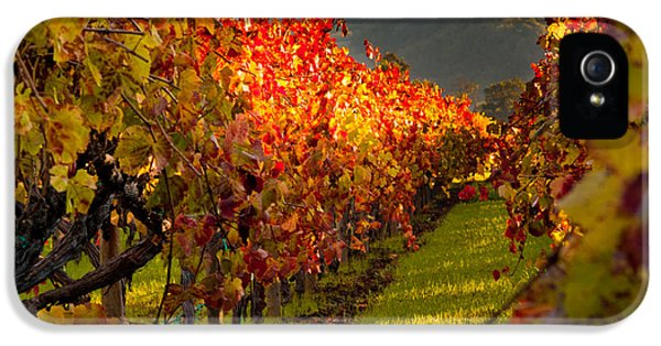 Color On The Vine IPhone 5 Case