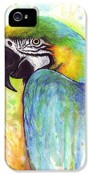 Macaw Painting IPhone 5 Case by Olga Shvartsur