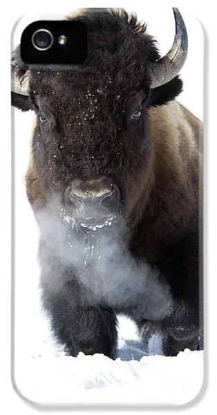 Coming Through IPhone 5 / 5s Case by Deby Dixon