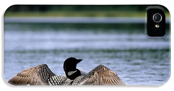 Common Loon IPhone 5 / 5s Case by Mark Newman