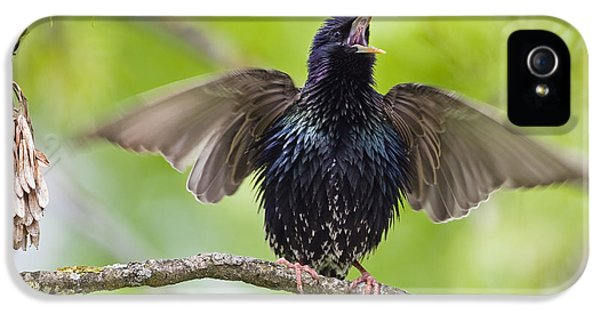 Common Starling Singing Bavaria IPhone 5 Case by Konrad Wothe