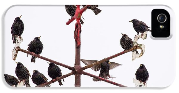 Starlings iPhone 5 Case - Common Starlings by Ashley Cooper