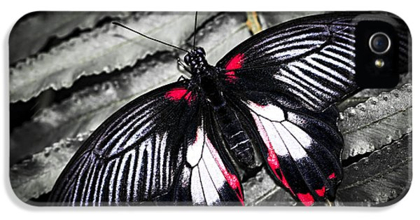 Common Swallowtail Butterfly IPhone 5 Case by Elena Elisseeva